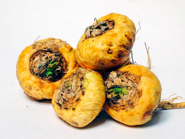 Maca root vegetable