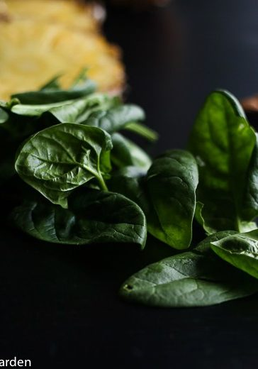 a few leaves of spinach laid out in a table